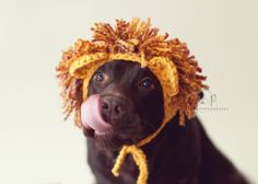 Download crochet pattern #041 - Large dog Lion hat, Halloween hat for dogs, Halloween dog costume - pdf tutorial by CozyThingsPatterns on Etsy