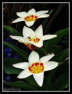 Die Farben des Frühlings 22/The colours of spring 22/春天的颜色22/ألوان الربيع 22