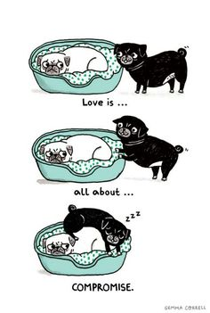 my two pugs, to a tee.