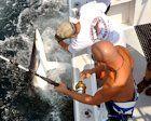 30 YEARS OF THE MONSTER SHARK TOURNAMENT