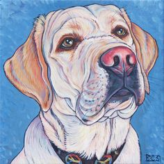 Knox the English Yellow Labrador Retriever Dog   Reminds me of dear sweet Luke.