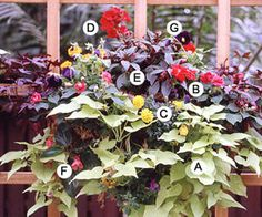 A. Wilec 'Margarita') - 1; B. Niecierpek 'Fiesta Rose' - 2; C. Aksamitka 'Durango Yellow'- 1; D. Pelargonia 'Designer Cherry'- 1 E. New Guinea impatiens (Impatiens 'Sonic Cherry') -- 1 F. Wax begonia (Begonia 'Prelude Scarlet') -- 1 G. Viola 'Sorbet Plum Velvet' -- 1