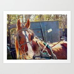 A Chilly Morning Amish Horse Art Print by Angelandspot - $14.00