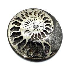 Pyrite Ammonite, ID mm Ammonite, Ebay