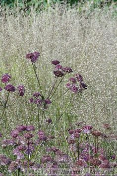 Sussex Prairies; Adam Woodruff,