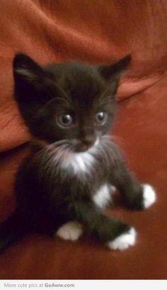 Awwww! Kitten with booties! LOVE
