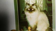 tierbetreuung hunde und katzen in Essen - Huttrop | eBay Kleinanzeigen