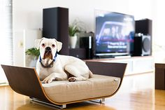Modern Dog Beds by MaxPet - Dog Milk