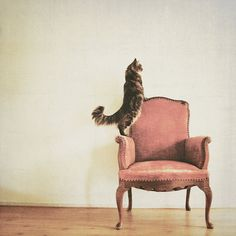 Art piece. photography Cat on pink antique chair