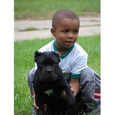 Cane Corso dogs in America.We often have Cane Corso puppies for sale ...