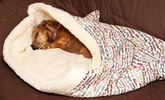 puppy pocket - wonder if puppy would like? or if katza's would take it over.......