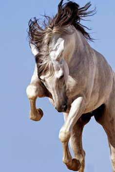 Horse catching some air!