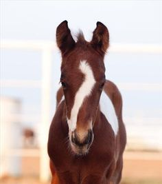 Unique face marking on this foal