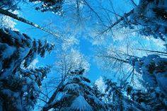 Like a snowflake make by trees