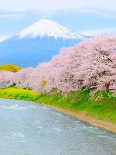 Ryugenbuchi, Mt.Fuji and Cherry blossoms, Fuji, Shizuoka, Japan, 龍厳淵, 富士山, 富士市, 静岡, 日本