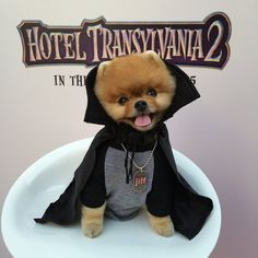 All hail Jiff Pom. Cute Funny Animals, Cute Baby Animals, Funny Dogs, World Cutest Dog, Cutest Dog Ever, Cute Puppies, Cute Dogs, Jiff Pom, Pomeranian Puppy