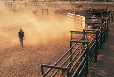 Aussie deserts: Our outback scenes - Australian Geographic (photo credit: Bill Bachman) Moving cattle on Napperby Station, Tanami Desert Australia Travel, Farm Life, View Image, Country Life, Cattle, Beautiful Landscapes, Landscape Photography, Pictures, Cowgirls