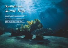 Spotlight On: Jamie Hall from the UK  Every month we interview inspiring photographers and shine the light on their influential work. This month we introduce Jamie Hall, a dive instructor and ocean conservationist, who recently won first place in Scuba Diving Magazine's 2018 Underwater Photo Contest. Underwater Photographer, Underwater Photos, Underwater World, Scuba Diving Magazine, Diving School, Before You Fly, Reef Shark, Shine The Light