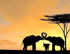 Elephant heart trunks in sunset. I'd want the two grown elephants a bit further apart so that two more baby elephants could be added between them.