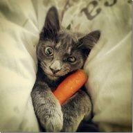 Qui a dit que les chats végétariens n'existaient pas ?