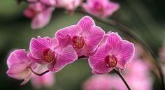 Mon orchidée fait de nouveaux plants, que faire