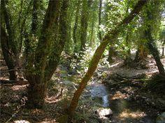 ΤΟ ΚΑΣΤΟΡΕΙΟΝ ΣΗΜΕΡΑ Το Καστόρι είναι ένα καταπράσινο ορεινό χωριό του νομού Λακωνίας σε υψόμετρο 500 μέτρων, που εκτείνεται στην ανατολική πλευρά του Βόρειου Ταϋγέτου και απέχει 17 χιλιόμετρα από…