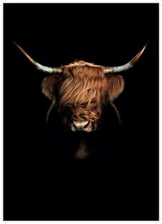 There's no need to exploit and harm someone for your own pleasure or profit. Highland Cow Painting, Highland Cow Art, Scottish Highland Cow, Highland Cattle, Farm Animals, Animals And Pets, Cute Animals, Fluffy Cows, Cute Cows