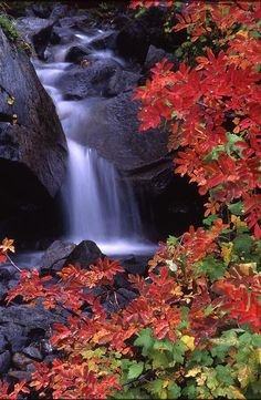 *Autumn - Paradise Valley Stream in Fall (by Ken Dietz) Paradise Valley, Beautiful Waterfalls, Beautiful Landscapes, The Places Youll Go, Places To See, Beautiful World, Beautiful Places, Valley Stream, Amazing Nature