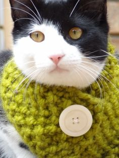 Cat Small Dog Cowl Scarf  SIZE SMALL  Custom by iheartneedlework, $15.00