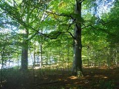 Herrliche Spaziergänge im Spätsommer Trunks, Plants, Island, Drift Wood, Tree Trunks, Plant, Planets
