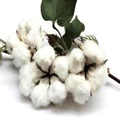 MECH-1 Floral, Flowers, Cotton, Royal Icing Flowers, Flower, Flower, Florals, Blossoms