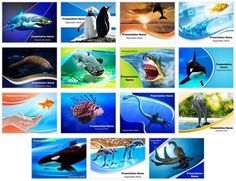 Check out our professionally designed and world class animal abuse water animals powerpoint templates bundle comes with 15 different powerpoint templates each template has editable charts toneelgroepblik Gallery