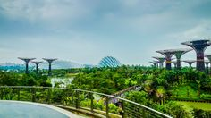 Singapore Garden of Eden by Mark Houston