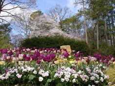 Birmingham Botanical Gardens   Birmingham Botanical Gardens   GardenVisit.com, the garden landscape ...