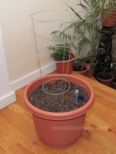 Convert a Standard Planter into a Self Watering Container I find plastic salad bowls are good for round pots, those Gladware containers for square pots and plastic shoeboxes for rectangular pots. Diy Self Watering Planter, Self Watering Containers, Container Plants, Container Gardening, Gardening Tips, Vegetable Gardening, Organic Gardening, Balcony Garden, Garden Pots