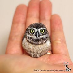 Palm Size Owl Stone Paintings by a Talented Japanese Artist Akie Nakata Painted Rock Animals, Painted Rocks, Owl Rocks, Burrowing Owl, Bird Barn, Berlin Art, Owl Photos, Owl Art, Baby Owls