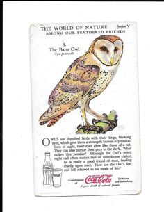 Coca Cola 1930's World of Nature Trading Card Series V Barn Owl Feathered Friend #CocaCola
