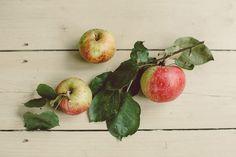 We love apple decor
