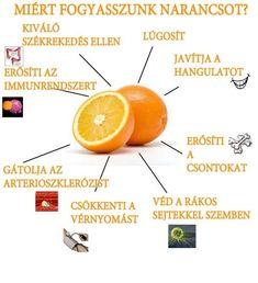 Életmód cikkek és képtár: Zöldség és gyümölcsök hatásai