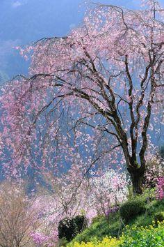 春の貴婦人 Spring Lady - zirouさん