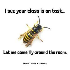 I see your class is on task...  Let me come fly around the room.
