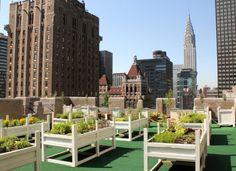 """What Hotels are doing to Save the Environment"" #WaldorfAstoria #WaldorfGoesGreen"