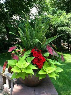Container gardening is a fun way to add to the visual attraction of your home. You can use the terrific suggestions given here to start improving your garden or begin a new one today. Your garden is certain to bring you great satisfac Patio Plants, Outdoor Plants, Garden Planters, Outdoor Gardens, Potted Plants, Container Flowers, Container Plants, Container Gardening, Gardening Vegetables