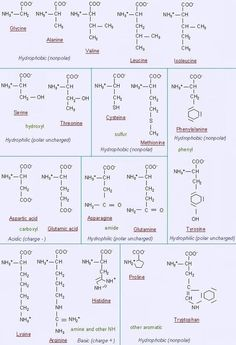 Amino Acid breakdown. Molecules.
