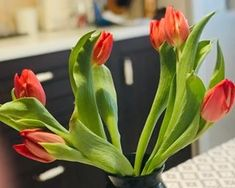 feed_image Interior, Plants, Image, Design Interiors, Interiors, Planters, Plant, Planting