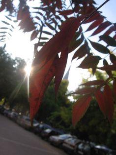 Fairyhungary: Napfényes ősz November, Plants, November Born, Plant, Planets