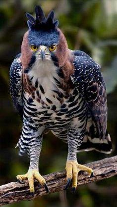Pretty Birds, Beautiful Birds, Animals Beautiful, Cute Baby Animals, Animals And Pets, Funny Animals, Exotic Birds, Colorful Birds, Bird Pictures