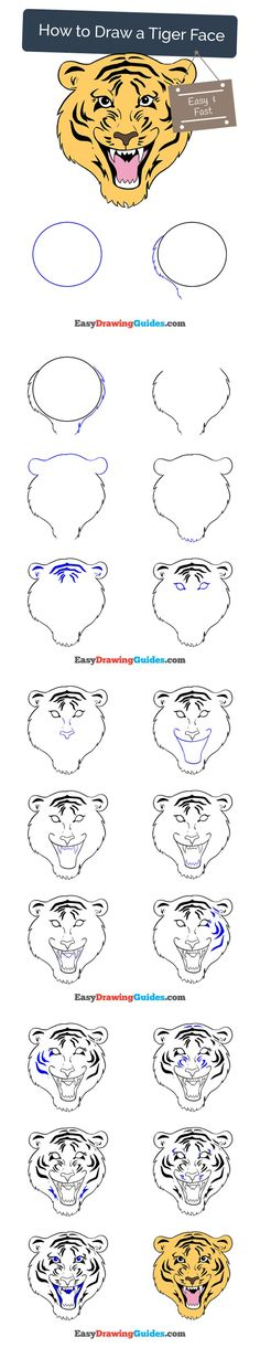 Learn How to Draw a Tiger Face: Easy Step-by-Step Drawing Tutorial for Kids and Beginners. #tiger #face #drawing #tutorial. See the full tutorial at https://easydrawingguides.com/draw-tiger-face/
