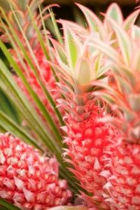 A few care requirements will remain true for the majority of bromeliads. This post includes tips for both indoor and outdoor bromeliad care and maintenance. Air Plants, Garden Plants, Indoor Plants, House Plants, Balinese Garden, Pineapple Planting, Growing Gardens, Low Maintenance Plants, Delphinium