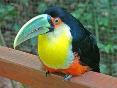 Fauna de Cataratas del Iguazu  - Puerto Iguazú, Argentina -